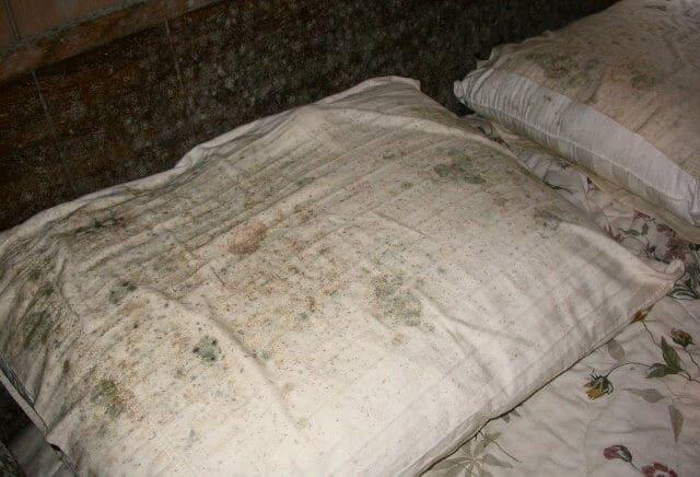 плесень на подушке